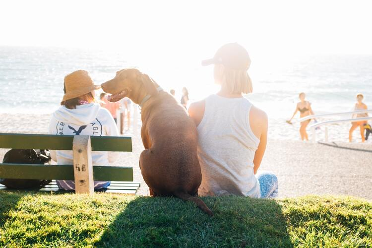 Discover These 8 Dog-Friendly Travel Destinations