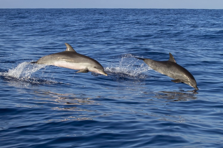 9 Best Places for Dolphin Around the World